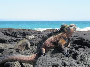 Onze mooiste foto's van de Galapagos