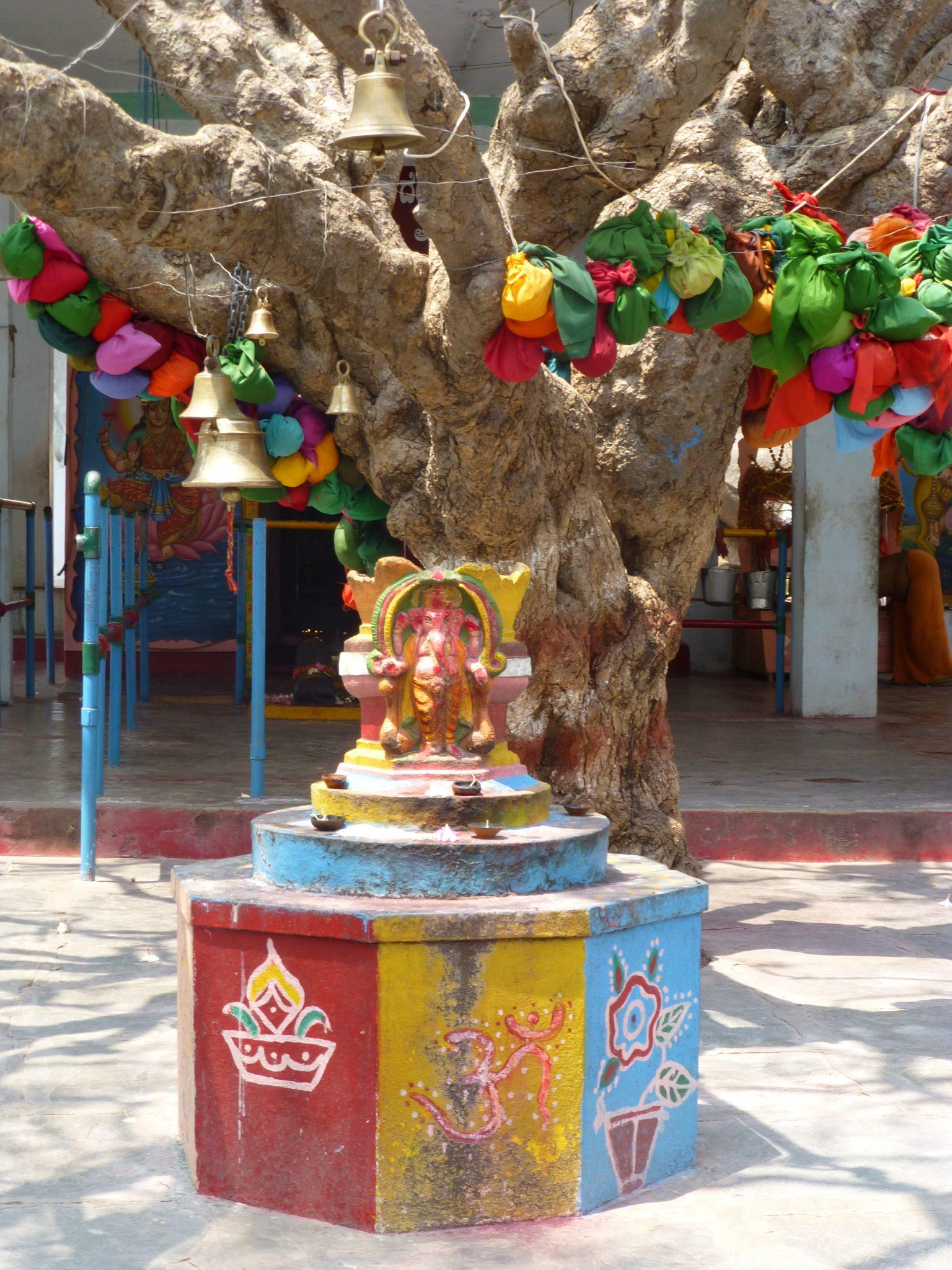 Heilige boom India