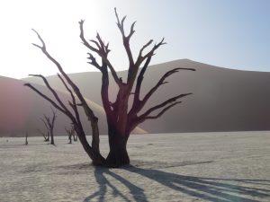 Sossusvlei Deadvlei Namibie