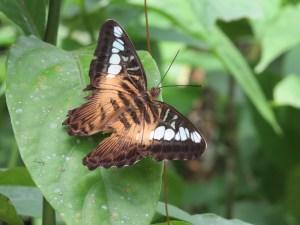 Vlindertuin Bohol filipijnen