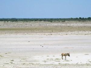 Kalahari Desert Botswana