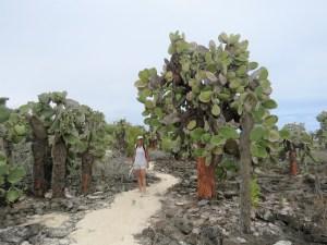 Cactusbomen op weg naar Las Grietas
