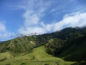 Valle-de-Cocora-Colombia