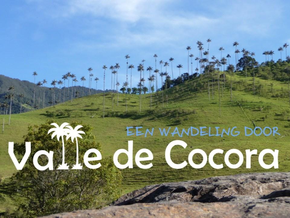 Wandeling door Valle de Cocora Colombia
