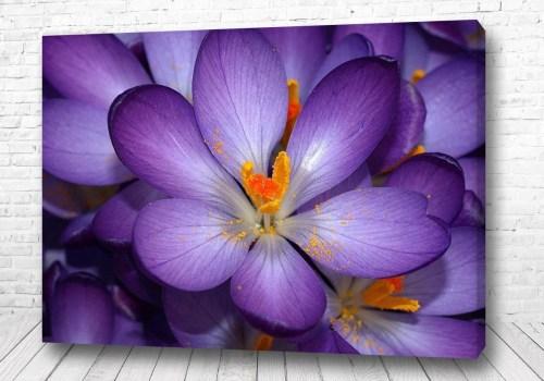 Постер Фиолетовый цветок