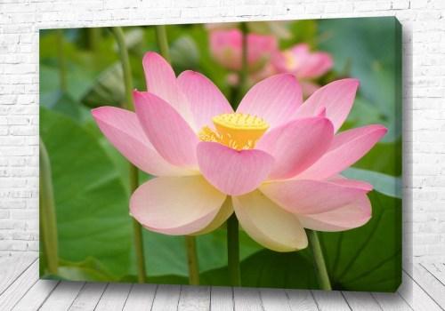 Постер Розовая нежность