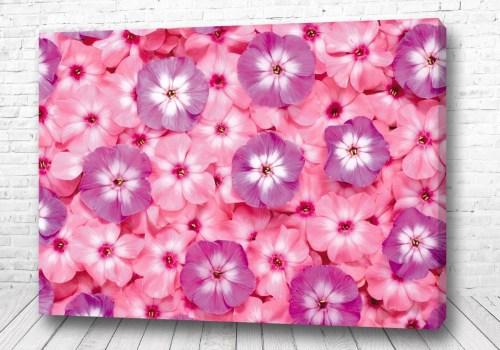 Постер Розовые цветы