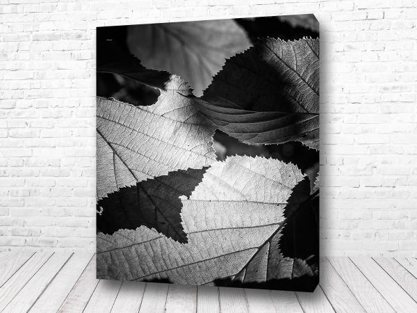 Постер Листья