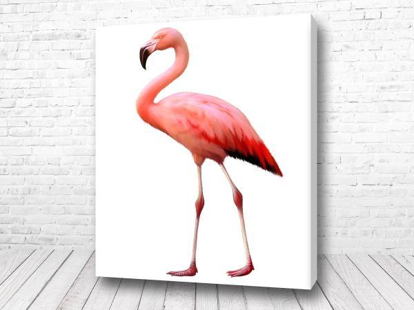 Постер Прелестный фламинго