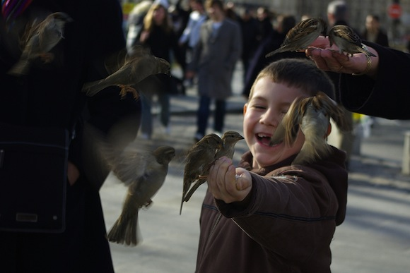 Paris Child Boy Smiling Birds