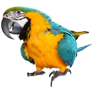 muursticker zoo family papegaai