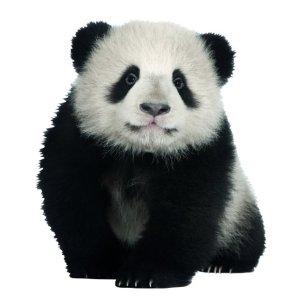 Muursticker zoo family pandabeer