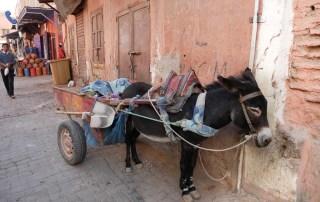 2 week morocco itinerary