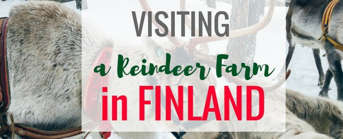 Visit a Reindeer Farm in Finland