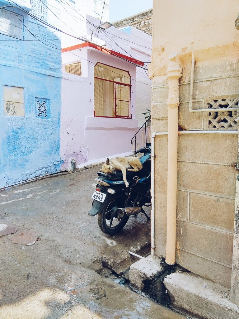 20 photos to inspire you to visit jodhpur