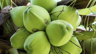 Health Benefits of Coconuts