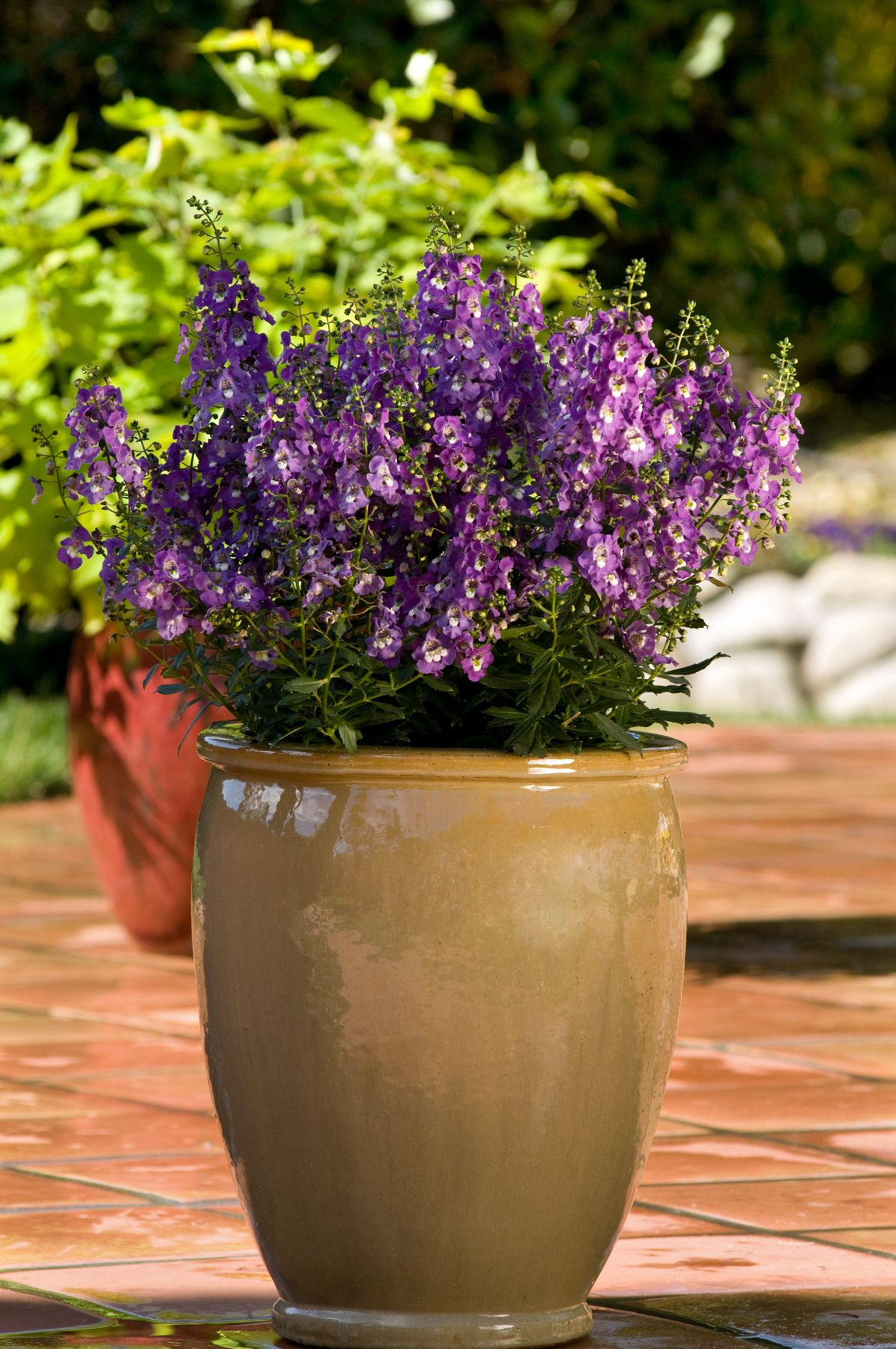Mixed Pots Flower