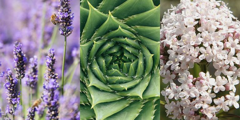 6 Garden Plants That Double Up As Miracle Health Remedies