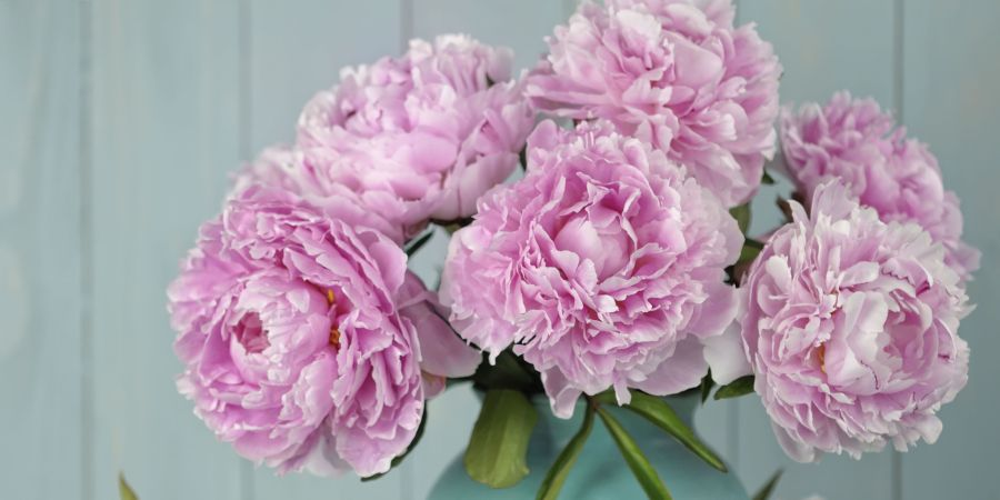 9 lessons in growing the perfect peonies peony pink flowers