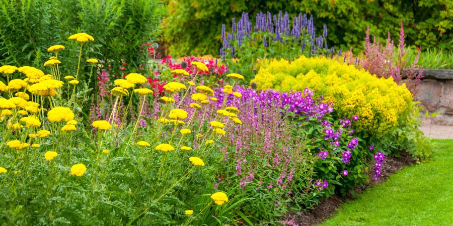 18 Best Summer Flowers   Beautiful Flowers That Bloom All Summer summer flowers