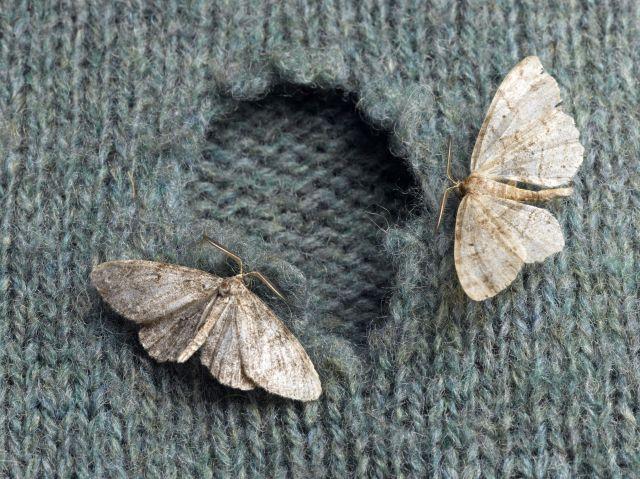 Risultato immagini per moths in home