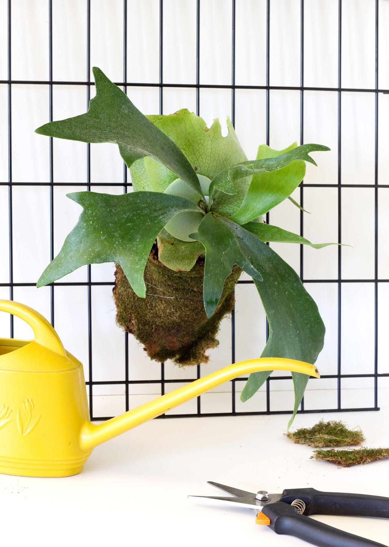 Plants Good Inside House