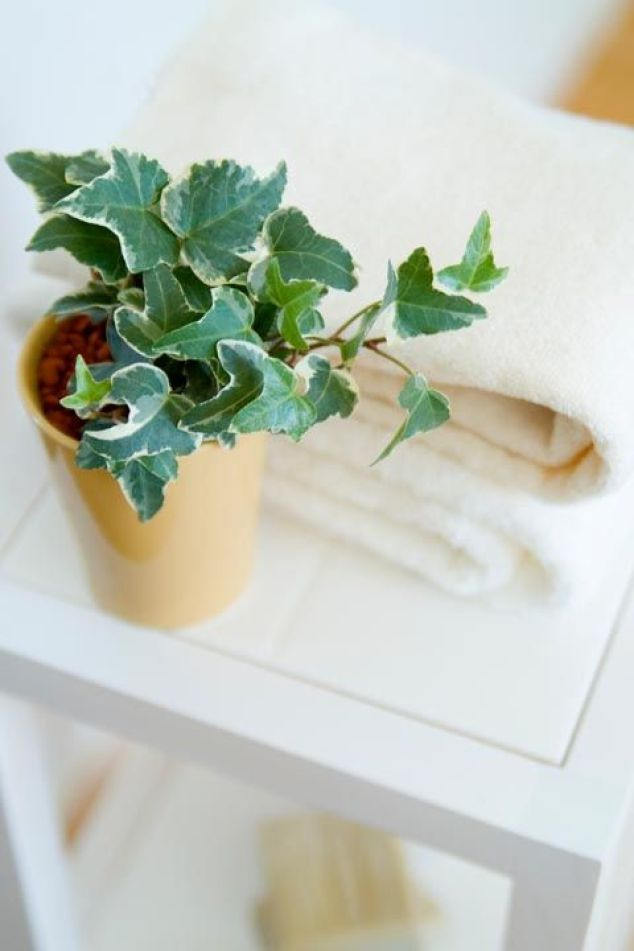 small indoor plants, best indoor plants, small english ivy