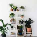How To Revive A Dying Houseplant How To Bring A Nearly Dead Plant Back To Life