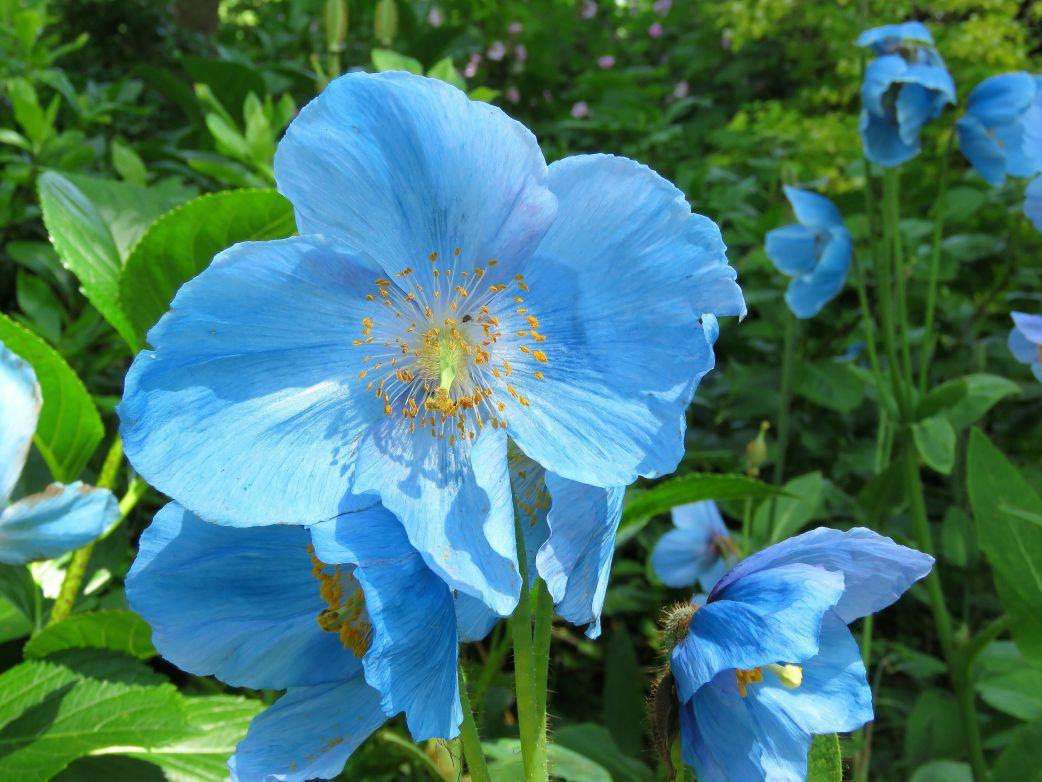 「blue flowers photo」の画像検索結果