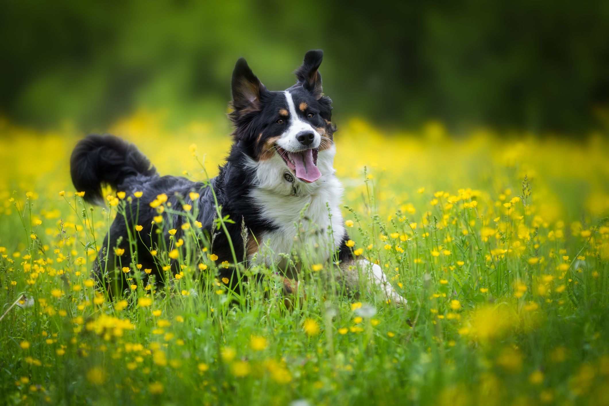 this is the smartest dog breed, according to a new study