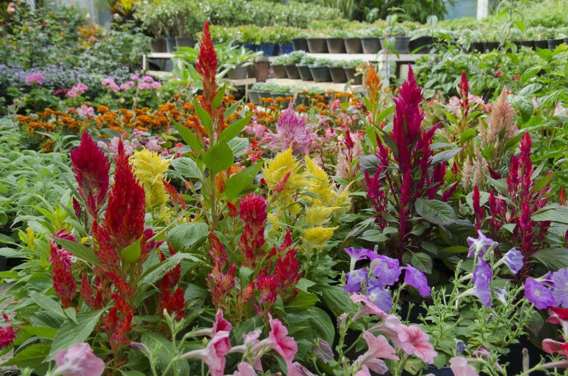 Best 34 Fall Flowers 2021 Plants For An Autumn Garden