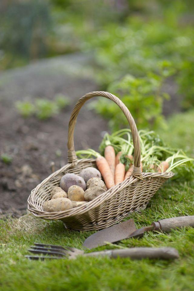 basket of vegetables in garden