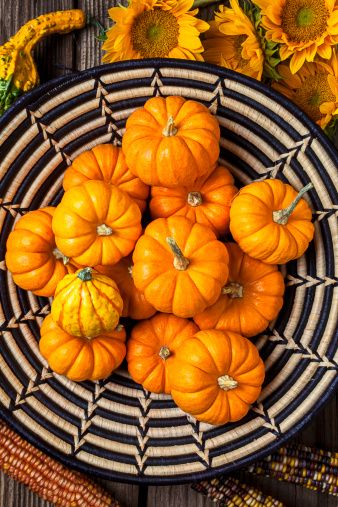 fun things to do on thanksgiving — mini pumpkin hunt