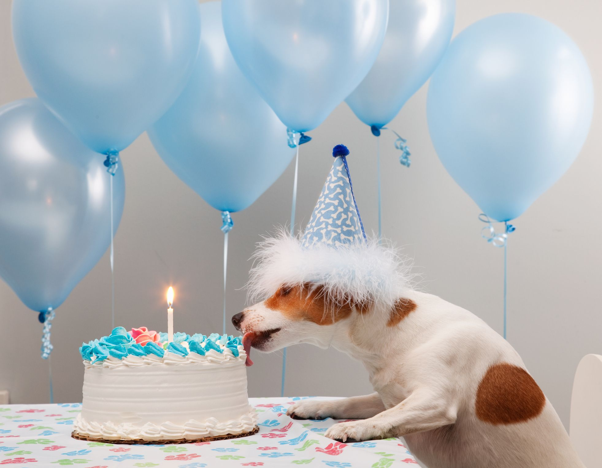 17 Birthday Memes For Your Dog Happy Birthday Dog Memes