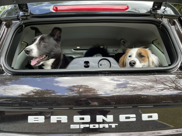 dogs in the back of a 2021 bronco sport