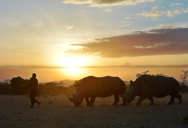 KENYA-ENVIRONMENT-POACHING-WILDLIFE-RHINOS