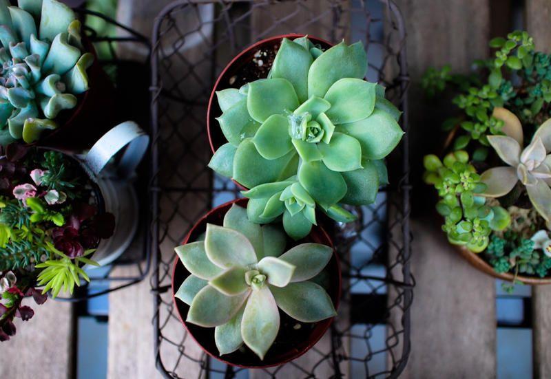 5 Piante Grasse Da Appartamento Facili Da Curare
