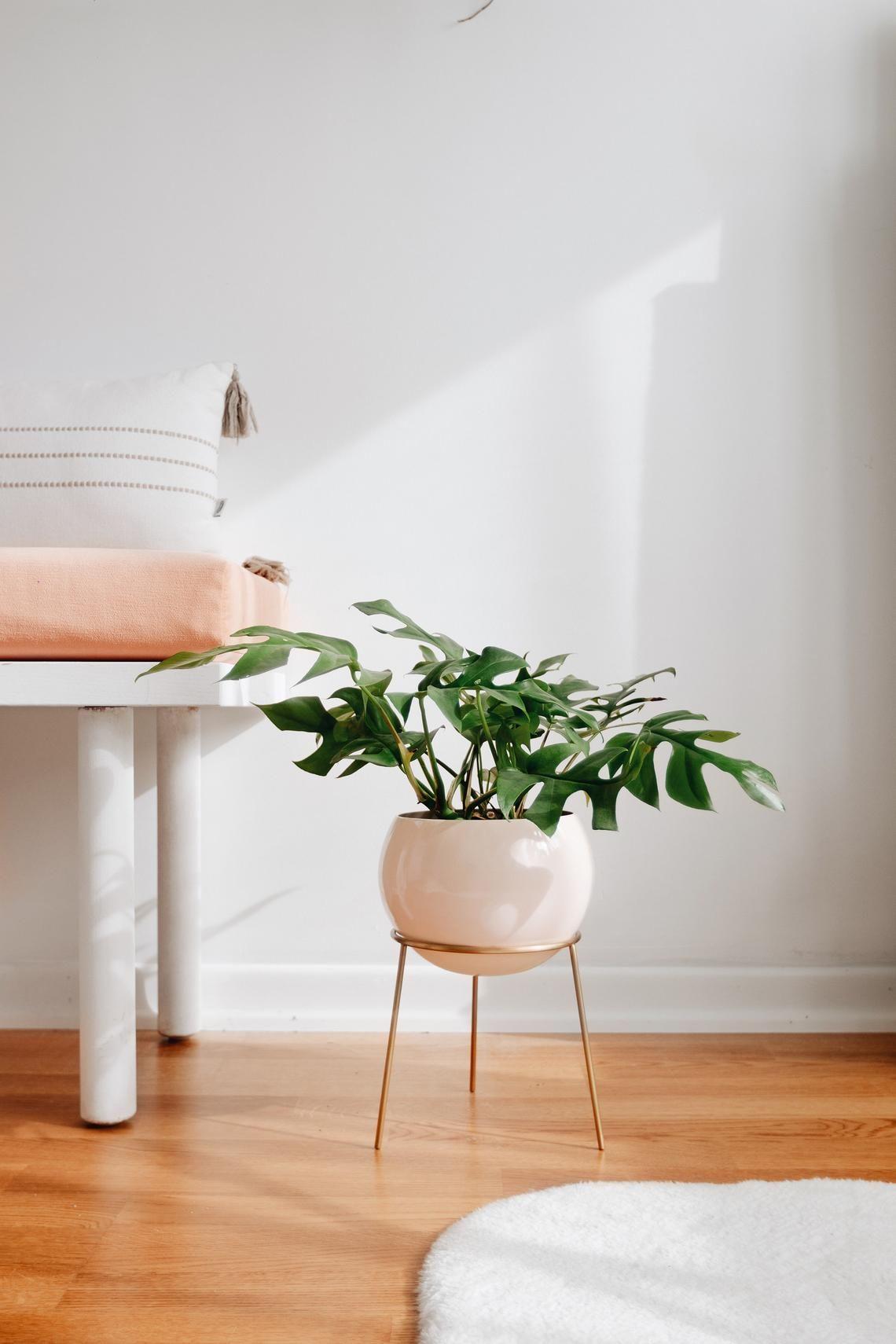30 best indoor plant stands for