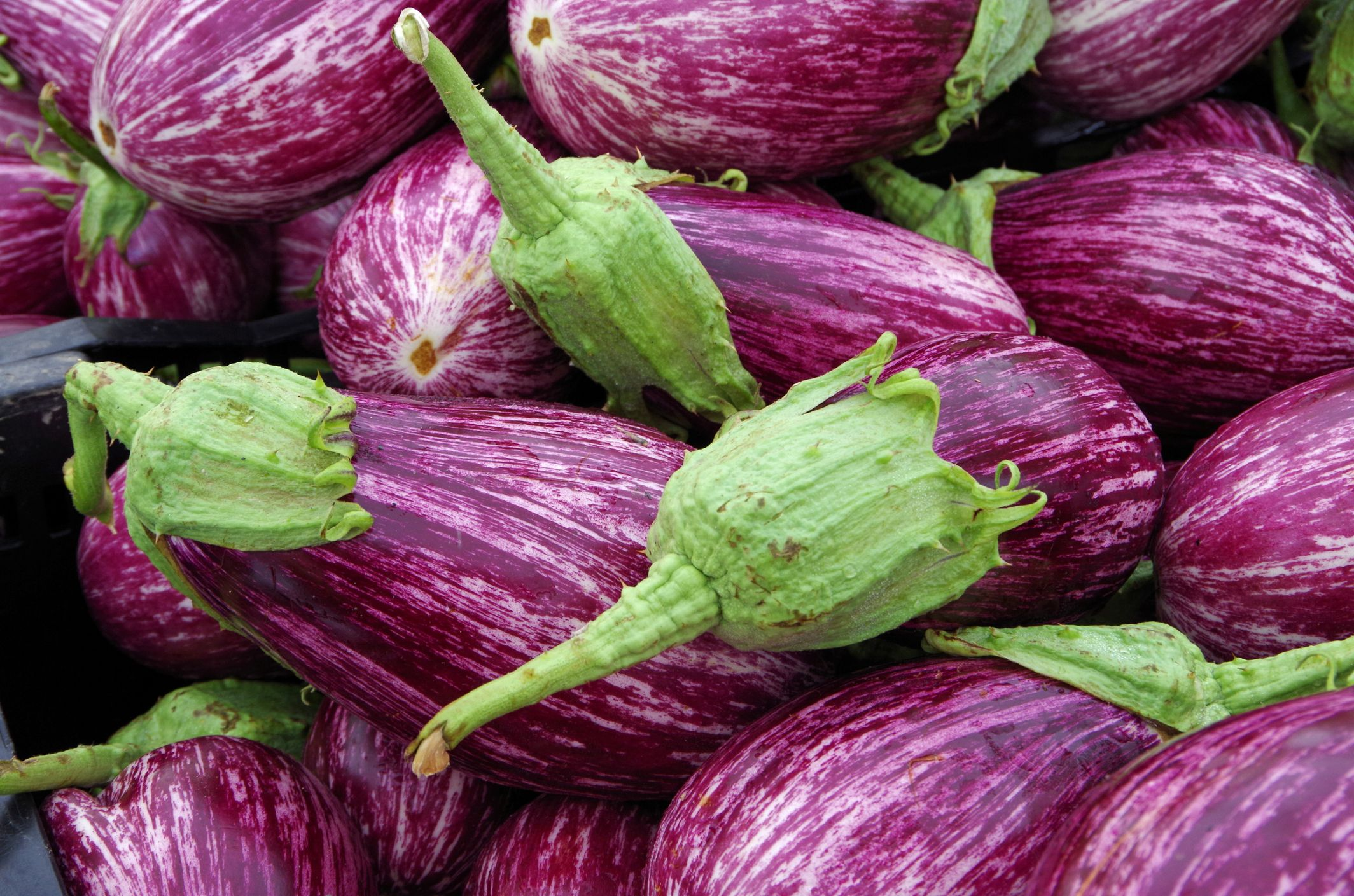How To Grow Eggplant Tips For Planting Eggplant