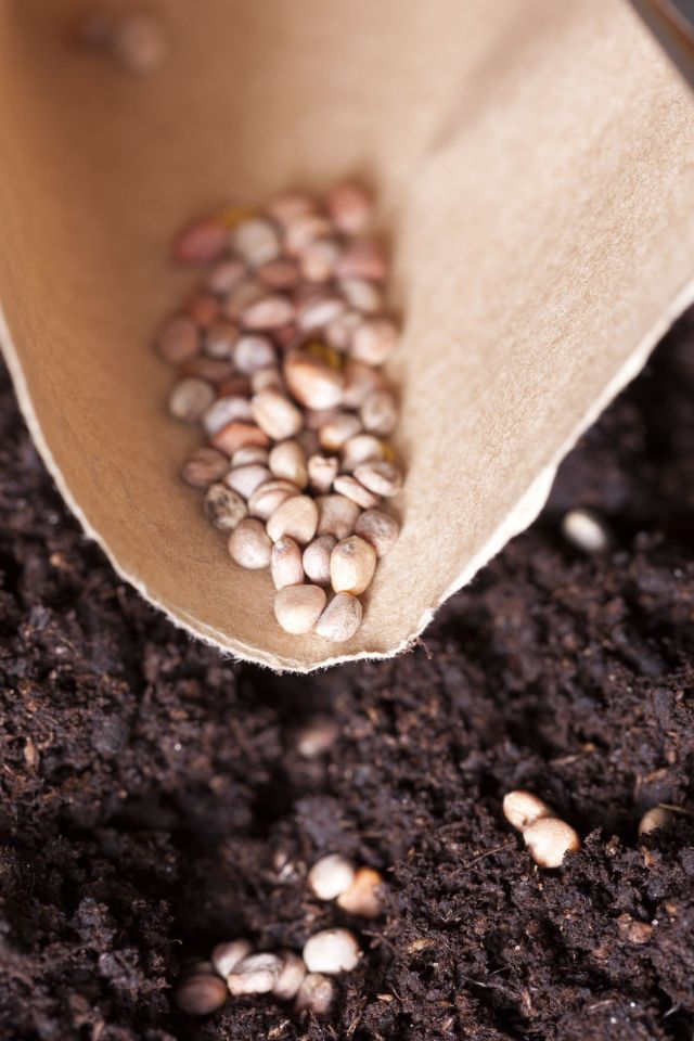 seeds being planted into rich, composty soil