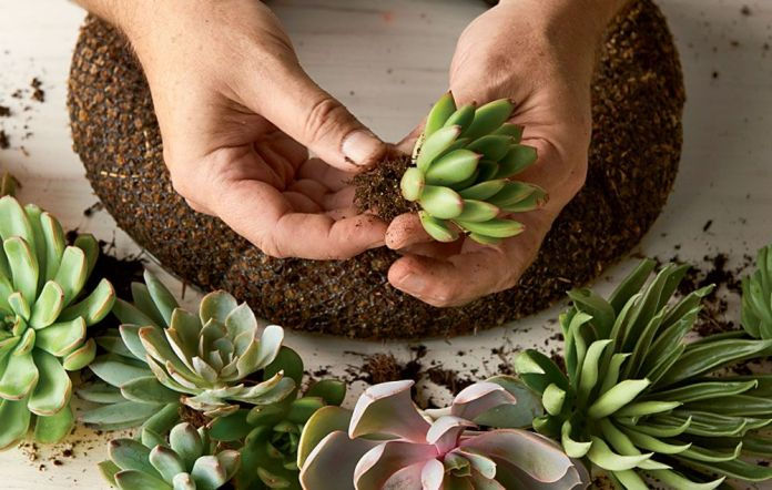 succulent wreath prep