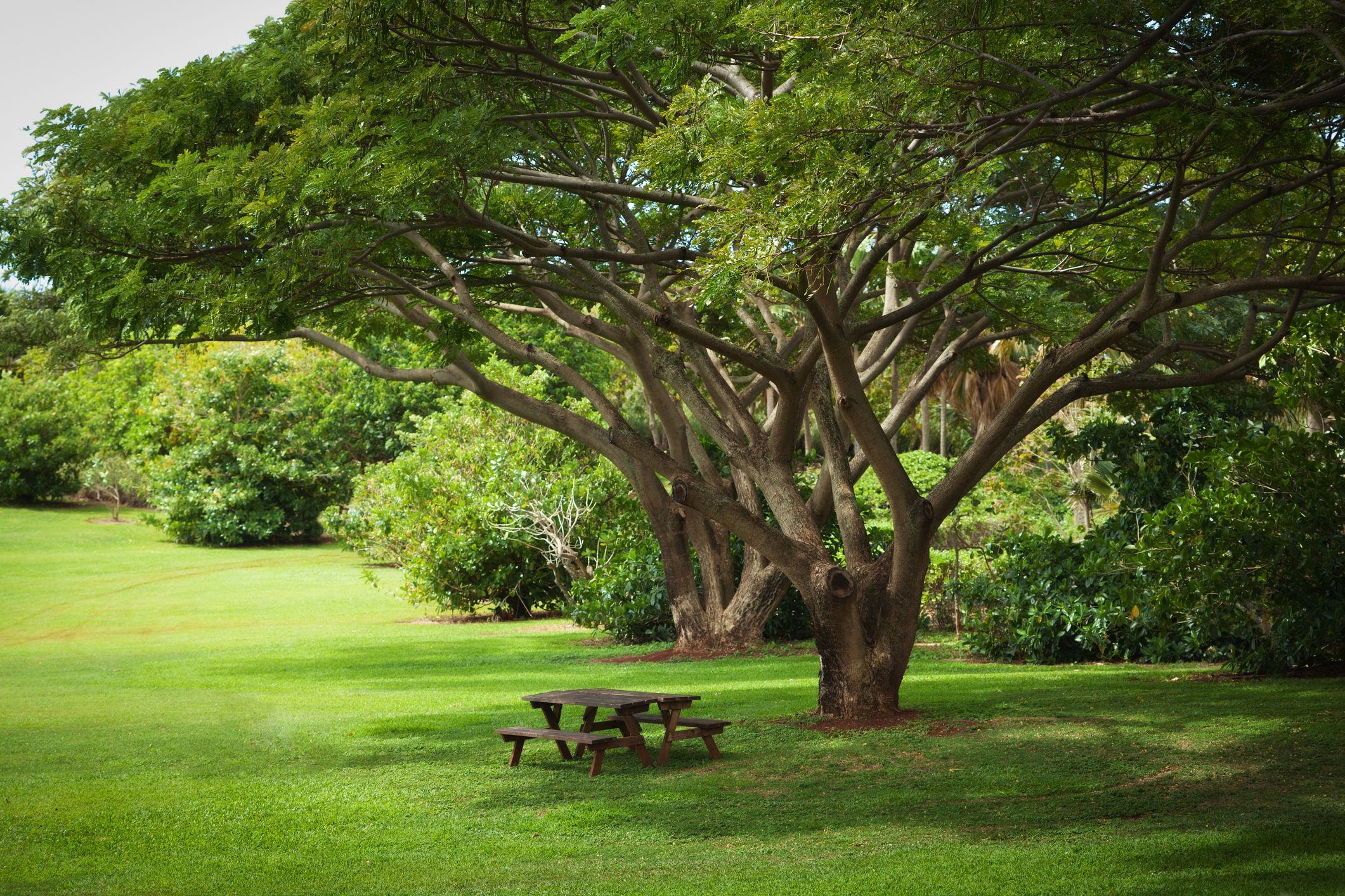 10 fast growing shade trees for dappled