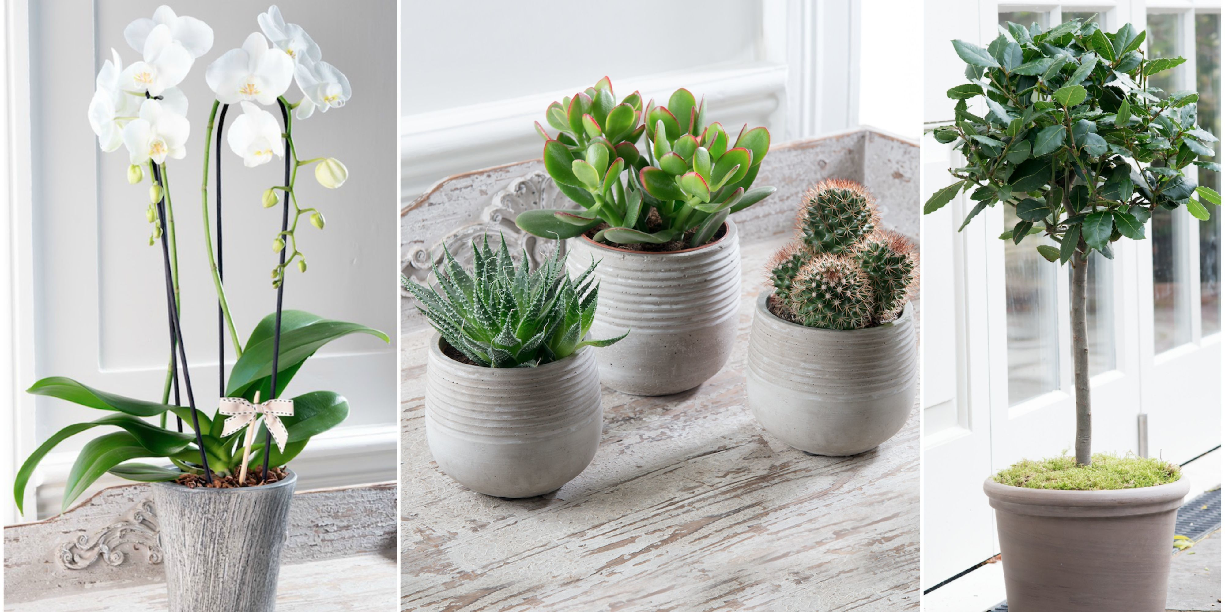 Stylish Potted Plants From The House Beautiful Collection