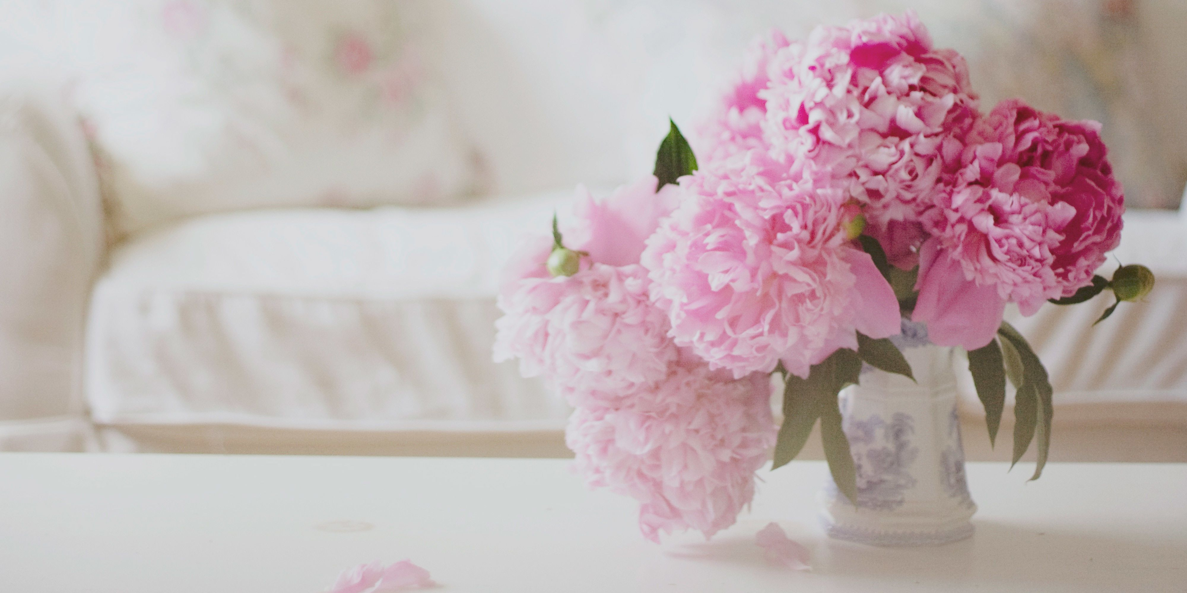 12 Facts About Peonies   History Of The Peony Flower
