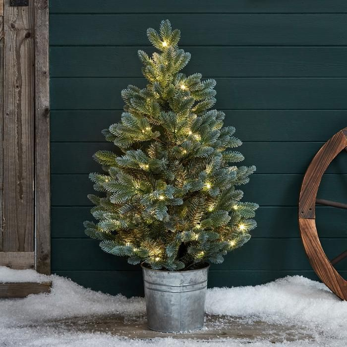 outdoor christmas trees for your garden