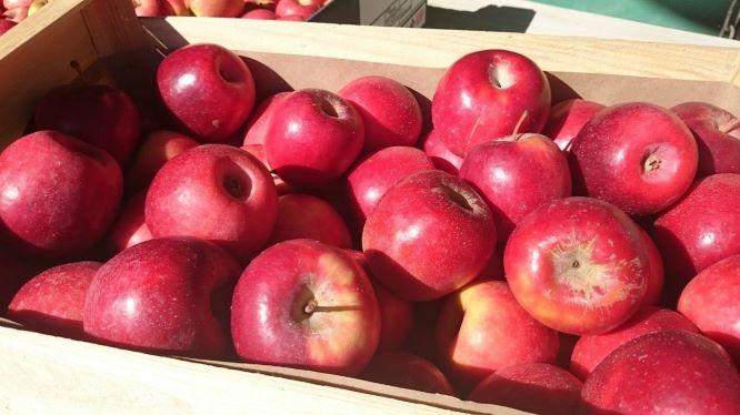 りんごの品種FUJI