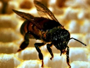 Robot bees: Walmart plots global pollination (IMAGE) |