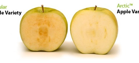 First GMO Apples to Hit U.S. Stores in February