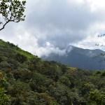 Tropical Montane Forest Sri Lanka