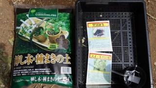 市民農園で全滅したスイートバジルと半分弱発芽の黒落花生、諦めずに種まきの土で育苗開始!